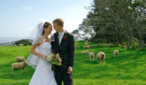 newlyweds taken their photo in a farm with a lot of sheep in the background